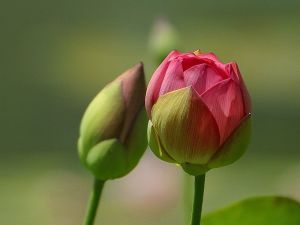 Budding Flower - inspiration
